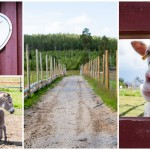 Idylliskt besök på Mickelbo gård